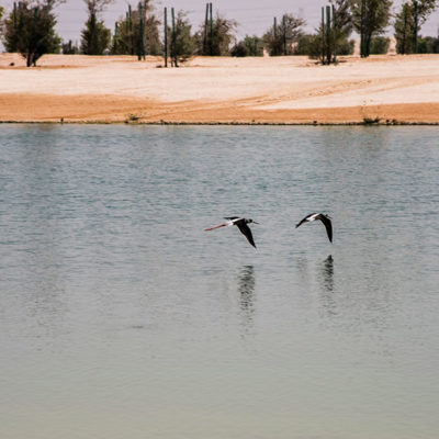 doha_north_sewage_004